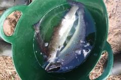Fish-rescue-3