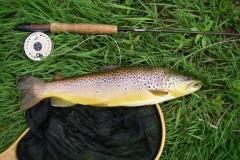 Tyne-trout-08